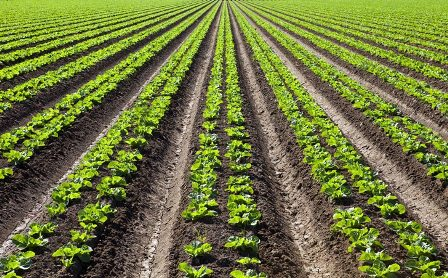 crops-biopesticides